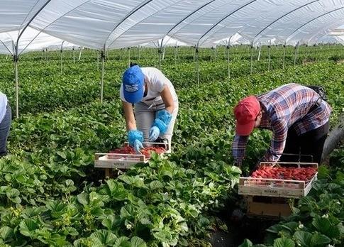 Если не приедут, будет катастрофа: польские переработчики фруктов и овощей о работниках из Украины
