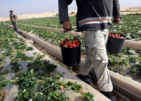 В Польше нет никого, кто бы мог заменить трудовых мигрантов из Украины