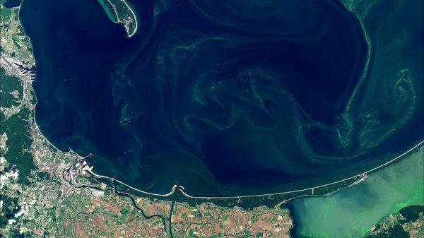Очередные балтийские пляжи в Польше закрыты из-за цианобактерий